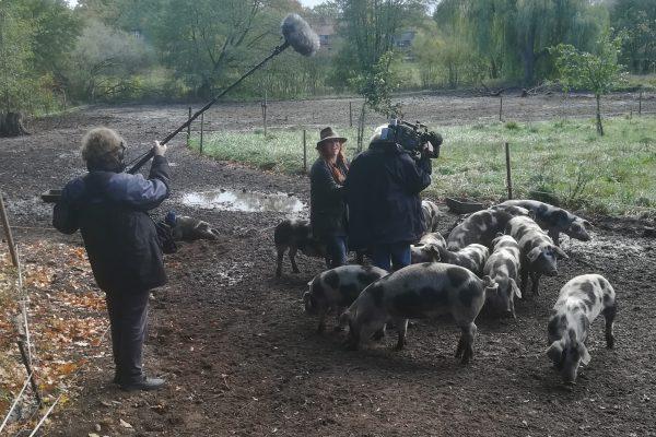 live malen auf der Schweinewiese